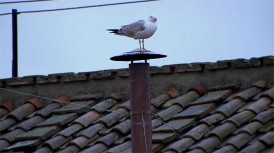 bird-chimney-1